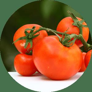 tomato-r